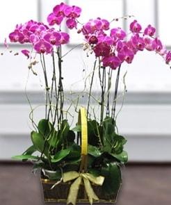 7 dallı mor lila orkide  Giresun uluslararası çiçek gönderme