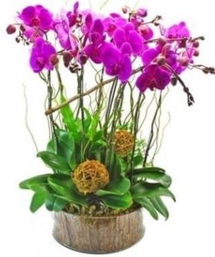 Ahşap kütükte lila mor orkide 8 li  Giresun online çiçekçi , çiçek siparişi