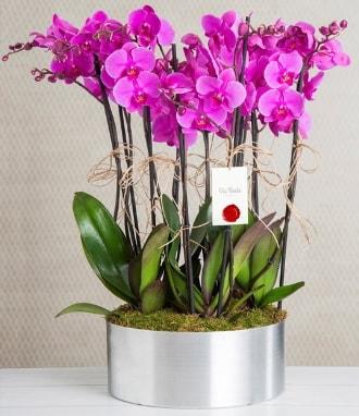 11 dallı mor orkide metal vazoda  Giresun uluslararası çiçek gönderme