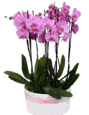Beyaz seramik içerisinde 7 dallı mor orkide  Giresun hediye sevgilime hediye çiçek