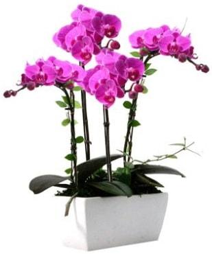 Seramik vazo içerisinde 4 dallı mor orkide  Giresun çiçek online çiçek siparişi