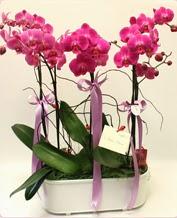 Beyaz seramik içerisinde 4 dallı orkide  Giresun çiçek mağazası , çiçekçi adresleri