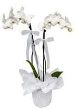 2 dallı beyaz orkide  Giresun internetten çiçek siparişi