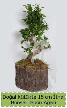 Doğal kütükte İthal bonsai japon ağacı  Giresun anneler günü çiçek yolla