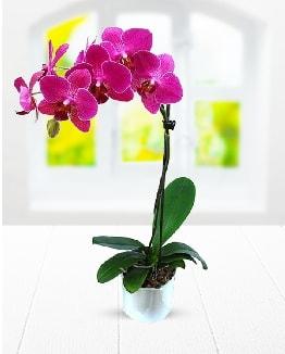 Tek dallı mor orkide  Giresun çiçek online çiçek siparişi