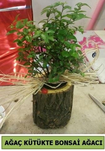 Doğal ağaç kütük içerisinde bonsai ağacı  Giresun uluslararası çiçek gönderme