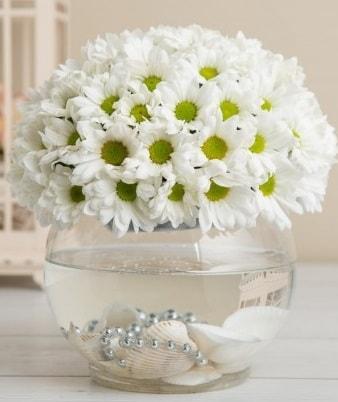 Fanusta beyaz Papatya  Giresun çiçek online çiçek siparişi