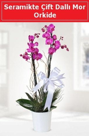 Seramikte Çift Dallı Mor Orkide  Giresun ucuz çiçek gönder
