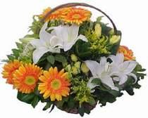 Giresun online çiçek gönderme sipariş  sepet modeli Gerbera kazablanka sepet